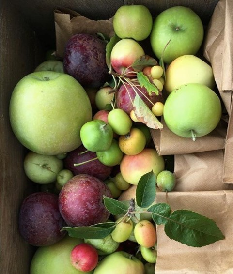 Land Bank is Planting a Heritage Apple Orchard on Millbrook Road Property