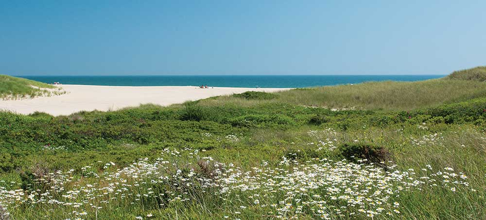 beach with white flowers in the foreground