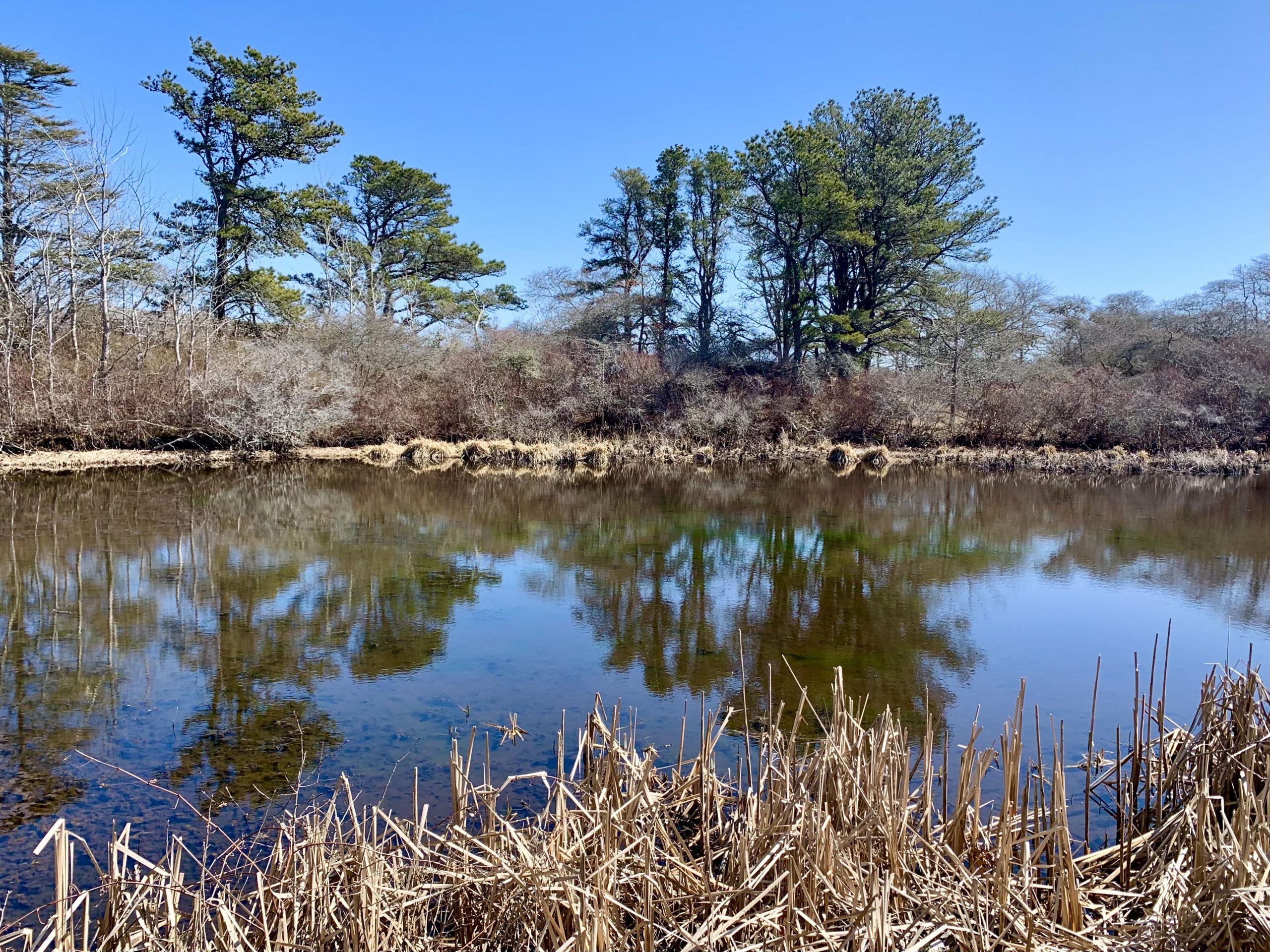 Tree Talk at Reyes Pond