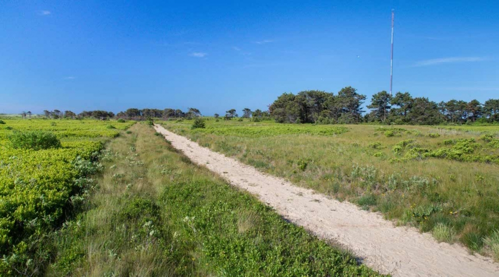 Trail at the Smooth Hummocks Coastal Preserve